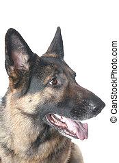 police, closeup, chien