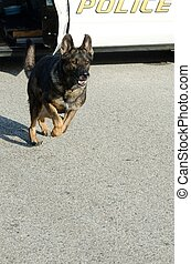 a police dog running from the patrol after a suspect.