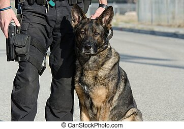 Police Dog - A police dog sitting next to his handler.