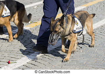 Police dog and the legs of the police