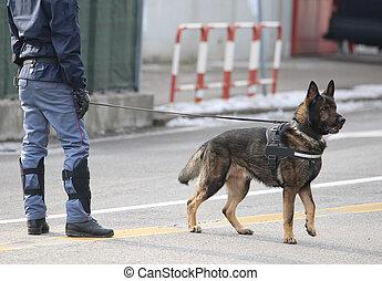 police, rues, chien, surveillance, entraîné, pendant, long