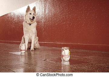 police, trace, odeur, chien, début, identification