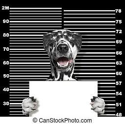 politie, foto, dog, black , station., crimineel