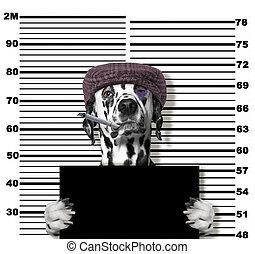 politie, foto, dog, witte , crimineel, station.