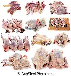 pollame, gruppo