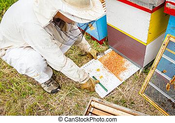 pollen, coloré, vérification, apiculteur, abeille, recueilli, blanc, plastique, cocotte