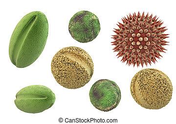 Pollen grains, illustration
