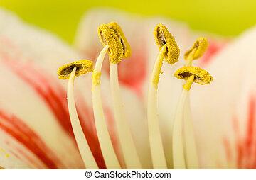 Pollen on stamen
