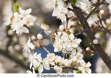 pollen, printemps, ramassage, temps