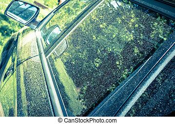 pollen, voiture