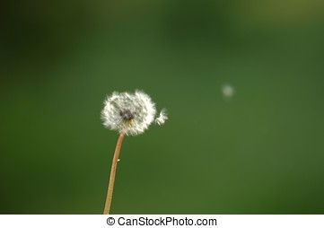 pollen, voler
