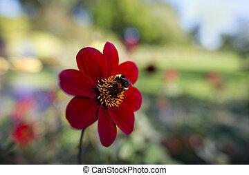 pollenation, fleur, abeille