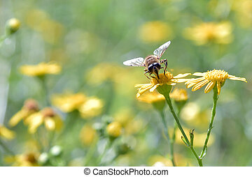 Pollination - The bee searching for nectar on the beautiful ...