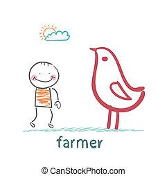 pollo, granjero, luego