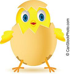 pollo, in, conchiglia uovo