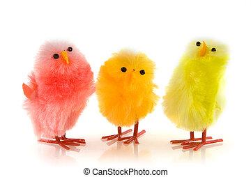 pollo, tres, coloreado