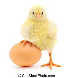 pollo, y, huevo