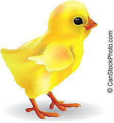 polluelo del bebé