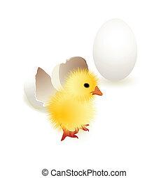 polluelo, huevo