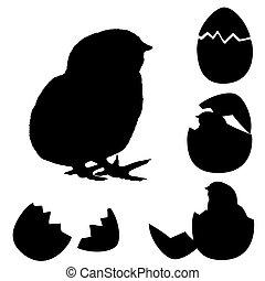 polluelo, shell., egg's, recién nacido