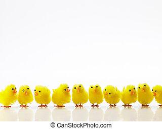 polluelos de pascua, consecutivo