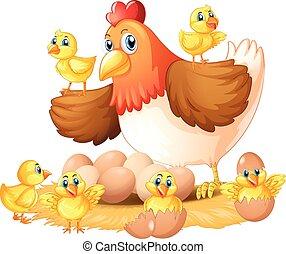 polluelos, gallina, nido