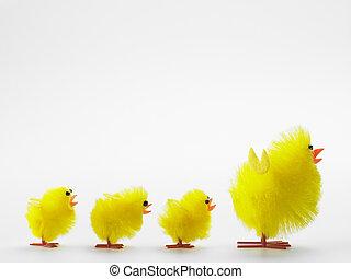 polluelos, pascua, familia