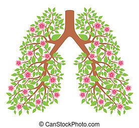 polmoni, sano