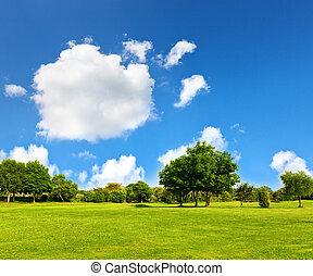polna trawa, golfowa zieleń