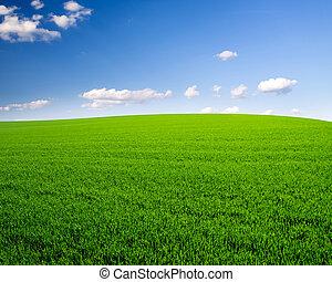 polna trawa, niebo, tło