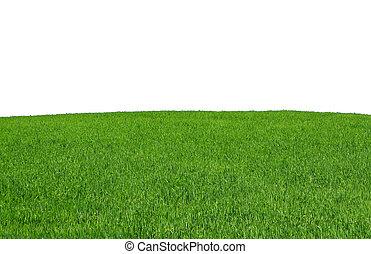 polna trawa, odizolowany