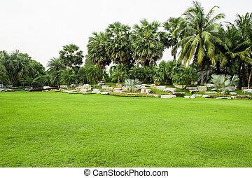 polna trawa, park, zielony