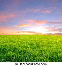 polna trawa, zachód słońca