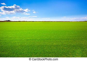 polna trawa