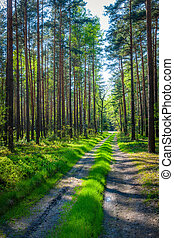 pologne, forêt
