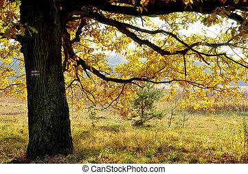 pologne, merveilleux, paysages