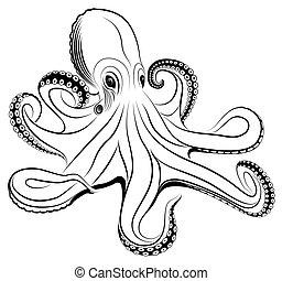 Mollusco Illustrazioni E Clipart9968 Molluscoillustrazioni E