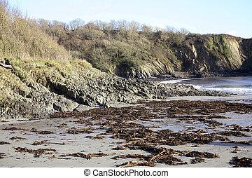 Polridmouth beach, Cornwall, with seaweed