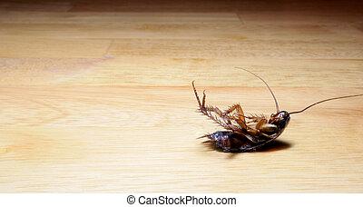 polvoriento, cucaracha, muerto