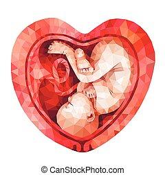 poly, dentro, bajo, feto, matriz