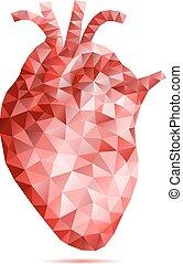 poly, serce, abstrakcyjny, niski, ludzki