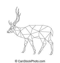 polygonal, hjort