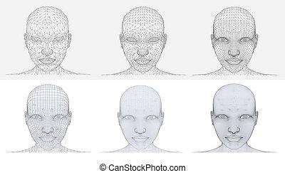 polygonal, huvud