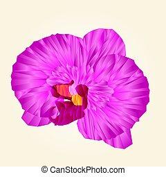 polygone, orchidee, schöne , freigestellt, purpurrote blume, weinlese