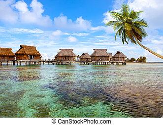 polynesian, palma, costa, típico, water., -, árboles, ...
