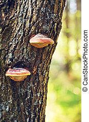 Polypore Mushrooms On Tree Stem