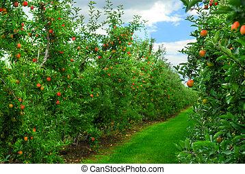 pomar maçã