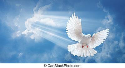 pomba, ar, com, asas, largo aberto