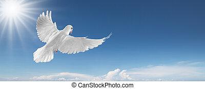 pombo branco, em, a, céu