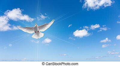 pombo branco, em, um, céu azul, símbolo, de, fé